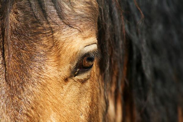 """Cane""  Mustang Rachael Waller Photography 2009"