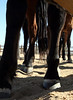 Mustang Legs<br /> <br /> Rachael Waller Photography 2009
