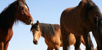Los caballos del cielo VI Rachael Waller Photography