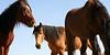 Los caballos del cielo VI<br /> Rachael Waller Photography