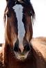 Silent conversation<br /> <br /> Rachael Waller Photography<br /> Mustangs