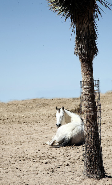 """Personal Space""<br /> <br /> Mustang<br /> Rachael Waller Photography 2009"