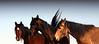 Los caballos del cielo I<br /> <br /> Rachael Waller Photography 2009