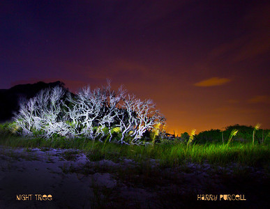 Dead tree on side of the road Ft Pickens. Canon 60D, f 13, ISO 100, 8 seconds. Lit with Stanley 1 million watt light Back sky is city lights from Pensacola.