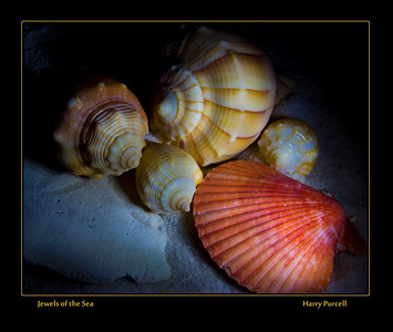 light painting on sea shells
