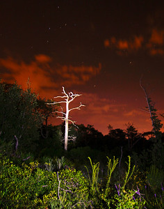 dead tree at the Gulf Island Seashore Park in Gulf Breeze. The light from Gulf Breeze can be seen in the background as can a few stars.