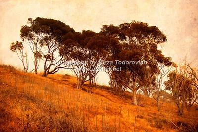 Portuguese Bend Trees - latc_0005
