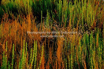Tramonto Salvia - latc_0040