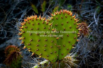 Cactus Heart - latc_0013