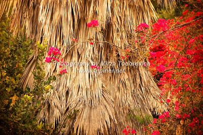 Abalone Cove Park 2 - latc_0029
