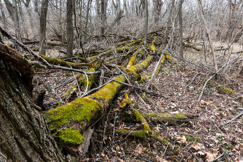 Log pile at the forest edge (8.2)