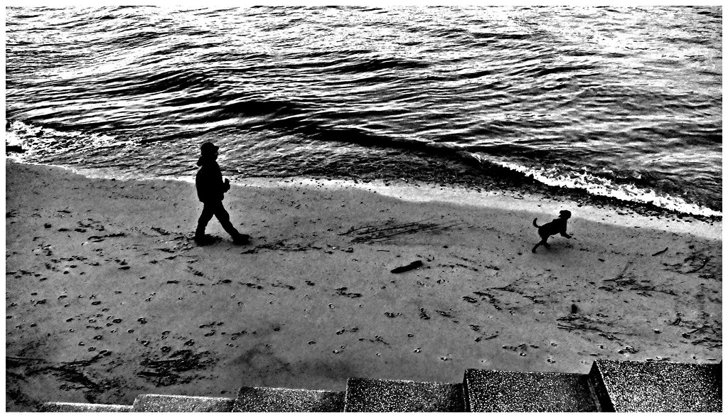 Dog Walking - South Bank London