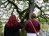 The lover's tree from the Sligo-Dromahair road