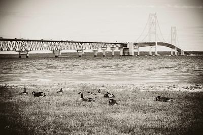 big mac candian geese , bridge