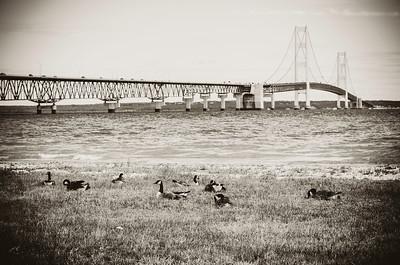 big mac candian geese , bridge