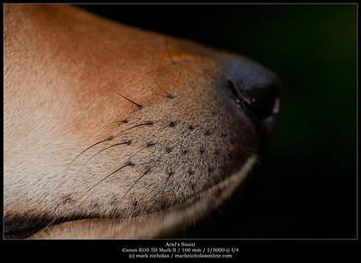 Ariel's Snout