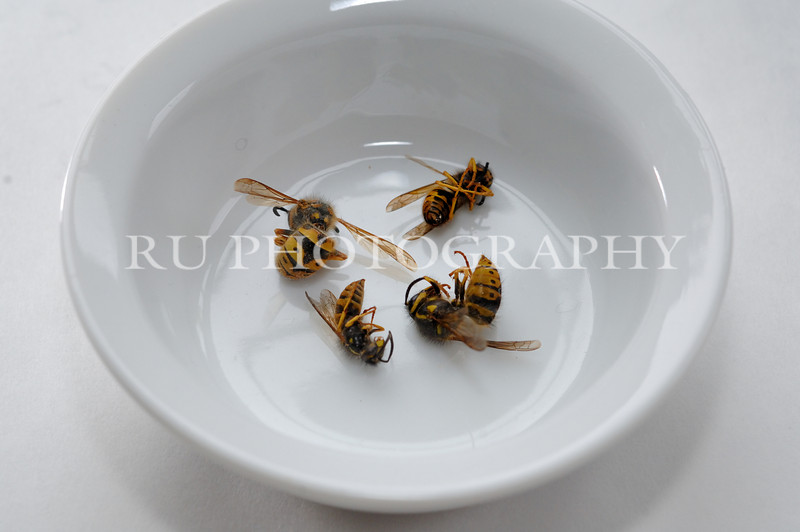 Bowl of Yellow Jackets