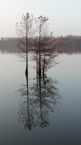 Winter Baldcypress Reflection