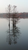 Winter Baldcypress Reflection