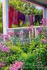 Red Day Impressions - Laundry Line and pink phlox, Maine