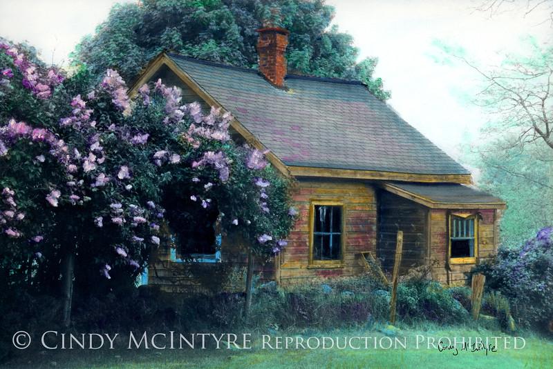 Lilac Shack - Somewhere near St. George, Maine