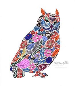 Owl_IMG_001