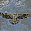 Manipulated to blue graphic of Osprey