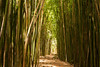 'Bamboo Cathedral'