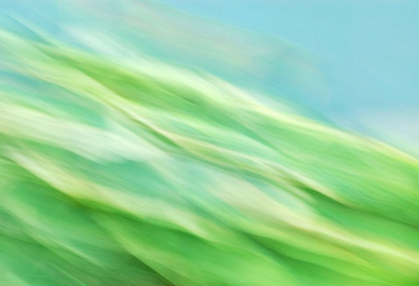 My version of Hosta plants,  Monet Style! This is an actual photograph, no alterations. It was achieved by a slow shutter speed and moving the camera side to side.