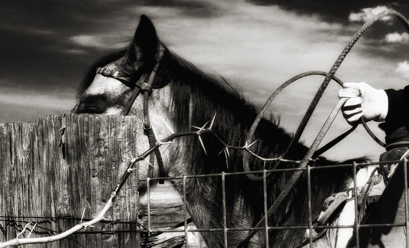 Far West Texas Cowboy<br /> Rachael Waller Photography