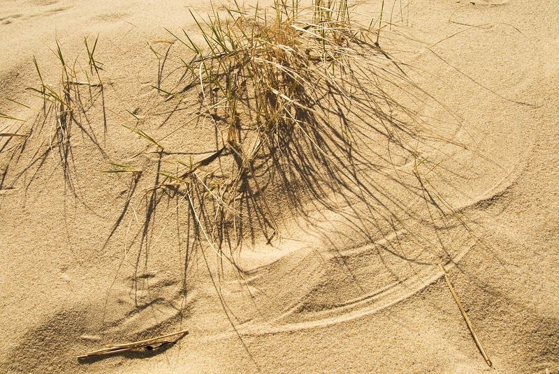 The Wind is an artist as it paints the movement of the grass on the sand.
