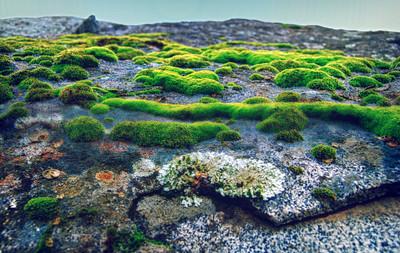 Moss on a boulder