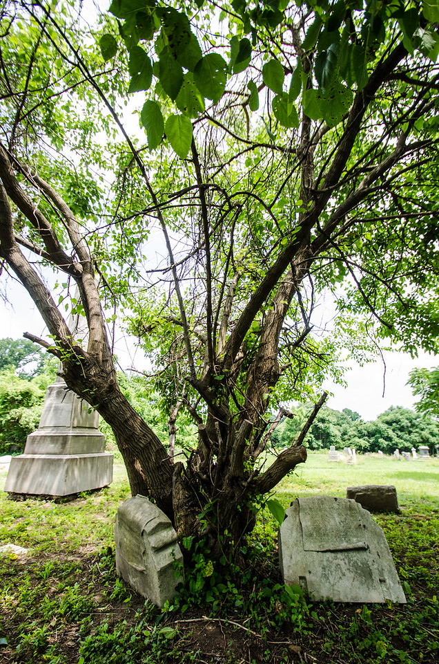 Many trees and bushes have sprouted up right on top of gravesites, displacing gravestones.