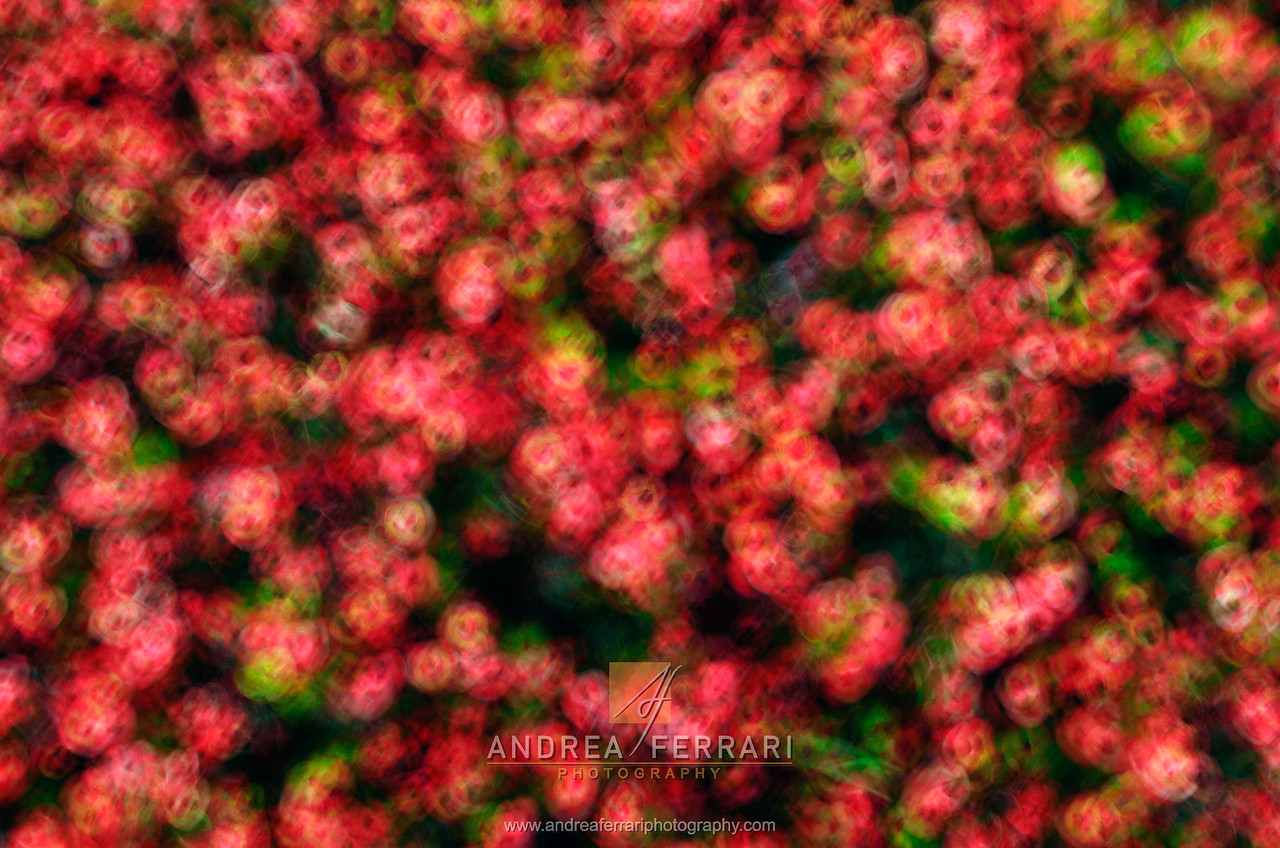 Circular pattern of red flowers