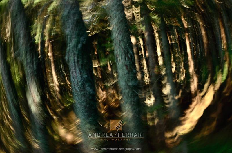 Vortex in the forest