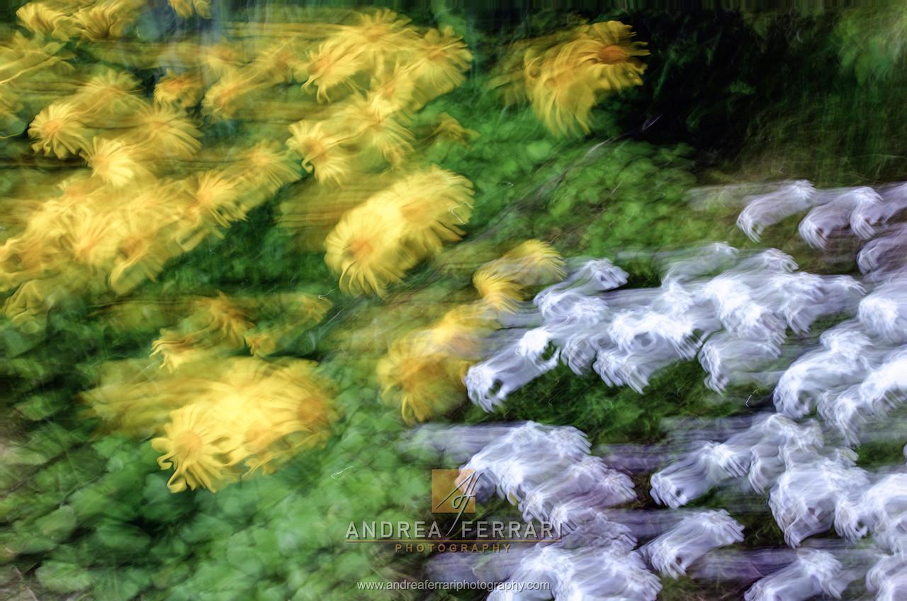 Hands flowers 1