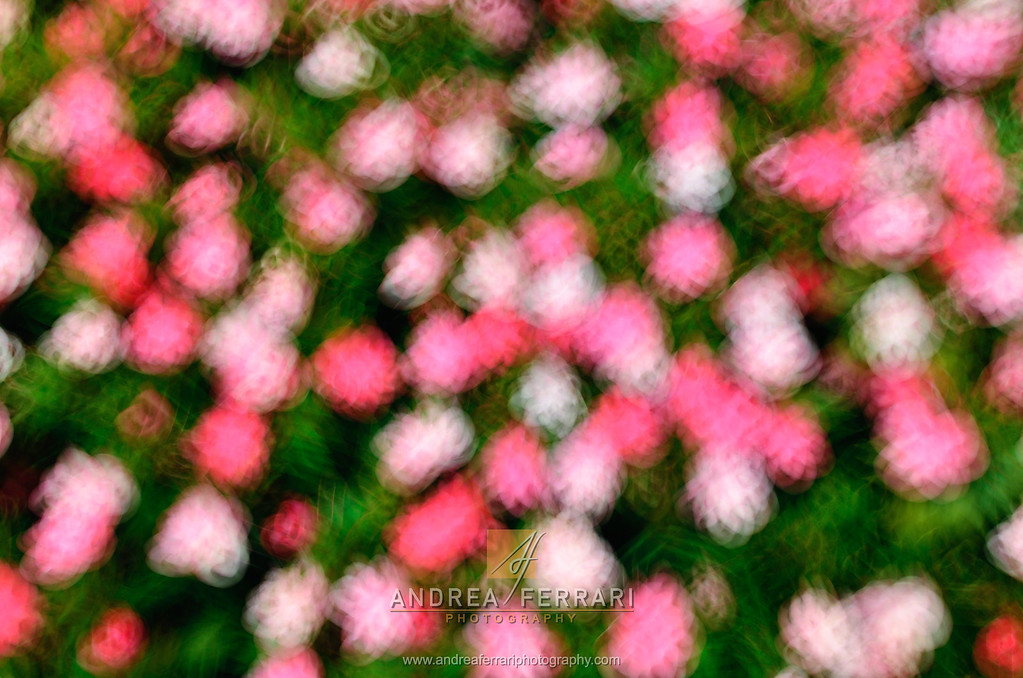 Pattern of pink and fuchsia flowers