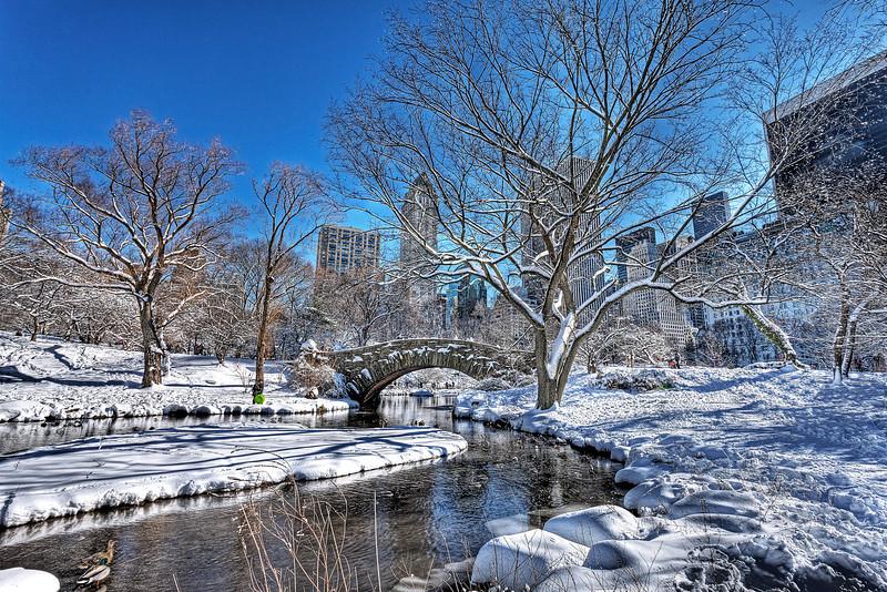 Winter Duck Pond