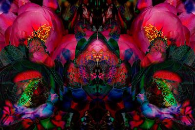 Cactus Flowerz-3