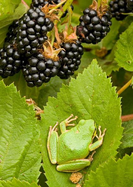 Frog Berries