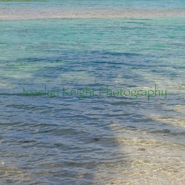 Palmwater7701