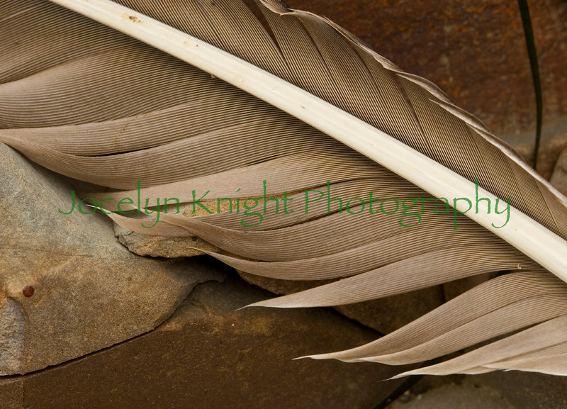 Rock Feather