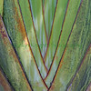 Fan Palm Square