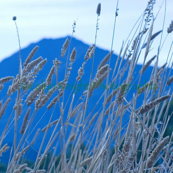 Mt Tam(8x8)5501