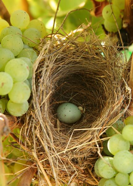 Grape Nest