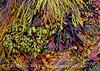 Seaweed Iridescence - rockweed and seaweed