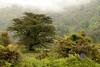 Foggy morning in New Zealand