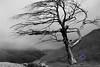 Bleak tree on a mountain in New Zealand
