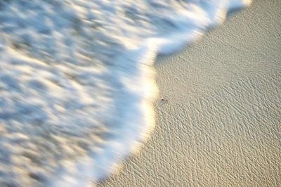 Fin de vague sur une plage de sable texturé avec un morceau de coquillage