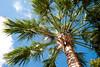 McKee Single Palm